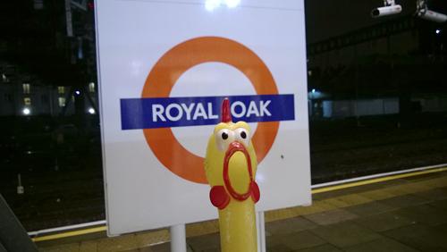 Royal-Oak
